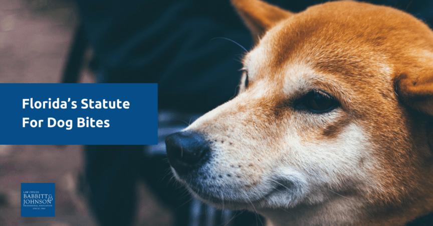 Florida's Statute For Dog Bite Injuries